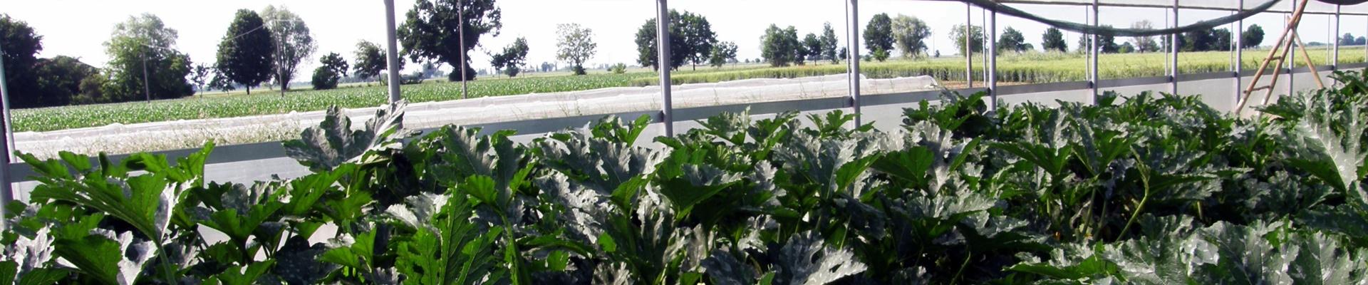 slide-zucchine-serra